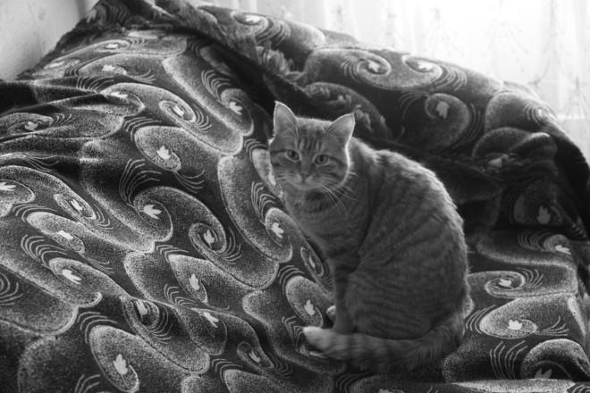 В стенах монастыря очень комфортно себя чувствуют несколько кошек.