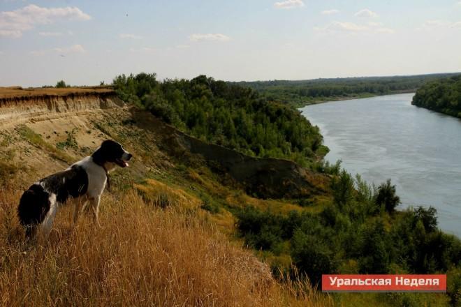 На фото собака местного егеря. Она с удовольствием позировала Руалю Упорова.