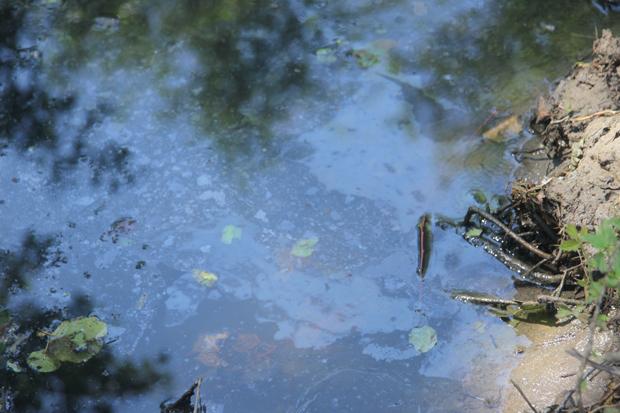 25 июня 2013г. Жители поселка Красноармейское обнаружили, что вся поверхность речки Ембулатовки покрыта непонятной черной маслянистой пленкой