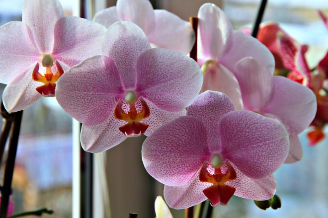 По мнению Натальи, цветы чувствуют, любят их или нет. Они умеют обижаться, вредничать и быть благодарными.