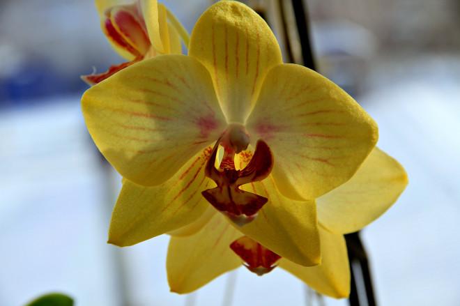 Всего в личной коллекции озеленителя насчитывается около 90 видов этого цветка.