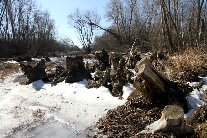 Вот одно из доказательств массовой вырубки деревьев.