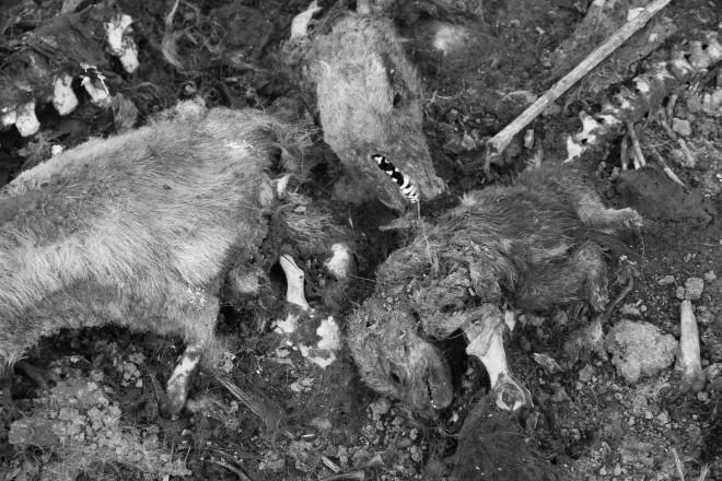 На этом фото останки собаки, которая судя по всему была умерщвлена вместе со своими щенками.