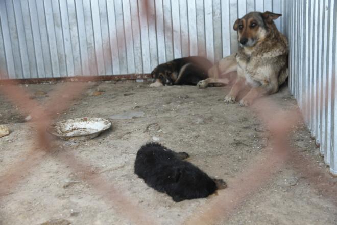 В одном из вольеров мы обнаружили мертвого щенка. Мы не знаем родились ли эти щенки в питомнике или их выловили в городе.