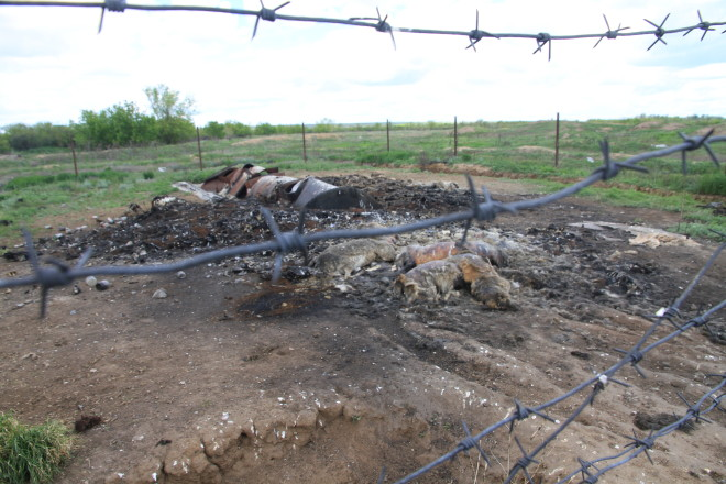 В сотне метров от питомника мы нашли могильник куда привозят туши мертвых собак.