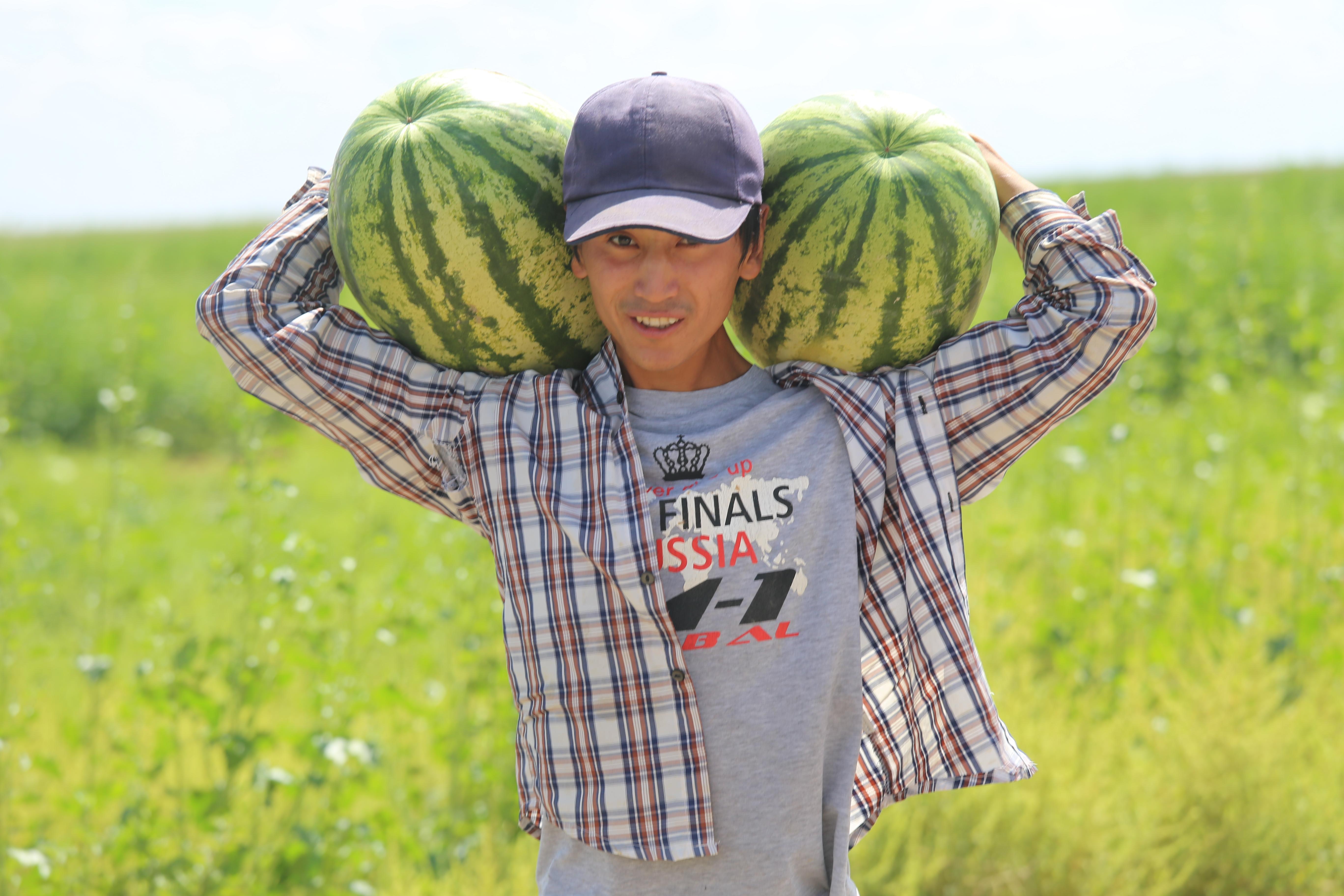Про арбузы выращивание 98