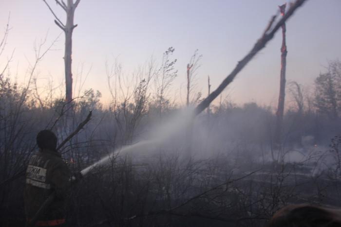 Деревья обгорают и падают, создавая новые очаги возгарания.