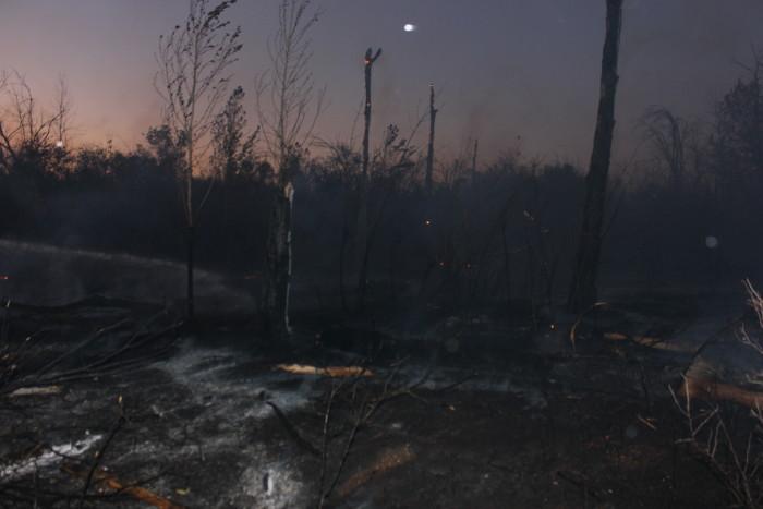 Кругом пепелище. Мокрая и одновременно горячая земля. На восстановление этих участков лесной чащи уйдёт не один десяток лет.