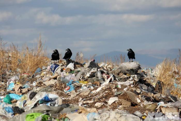 мусорный полиг