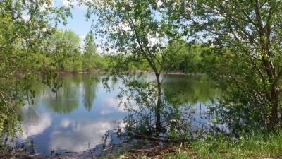 пруды весной