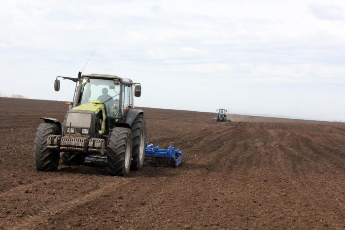 сеют зерно