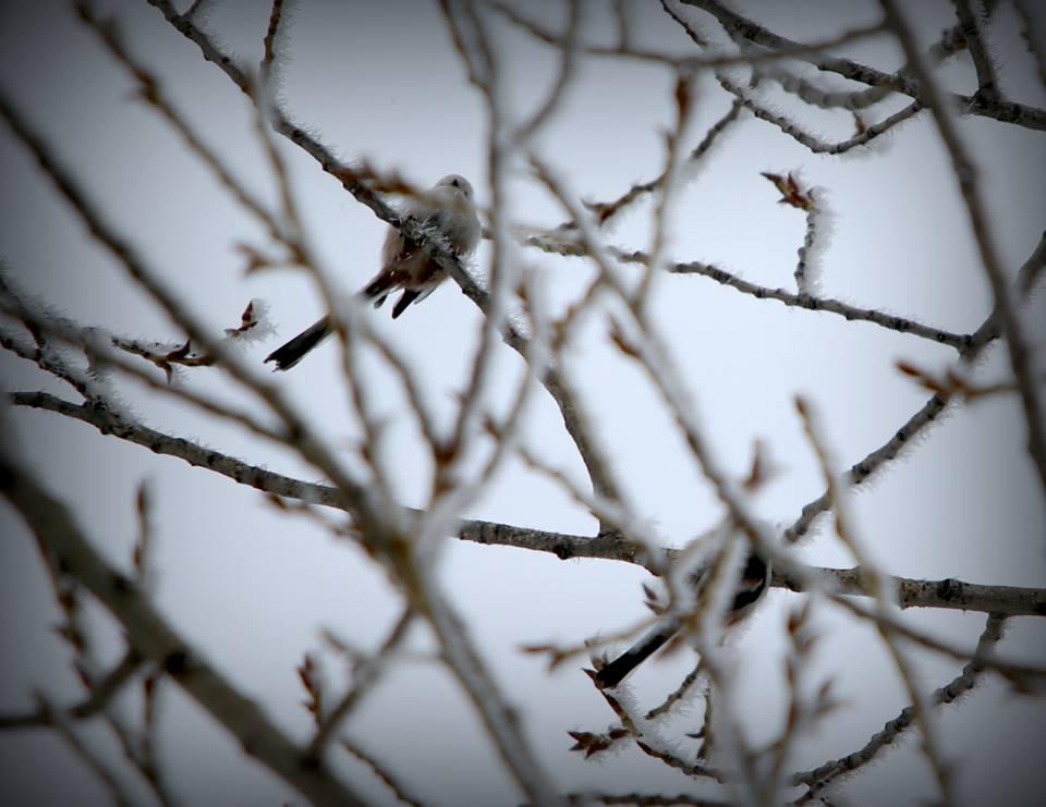 Прогноз погоды на выходные в Уральске и Аксае